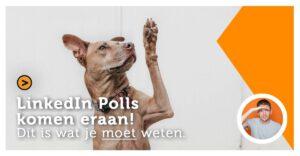 LinkedIN Polls komen eraan! Dit is wat je moet weten.